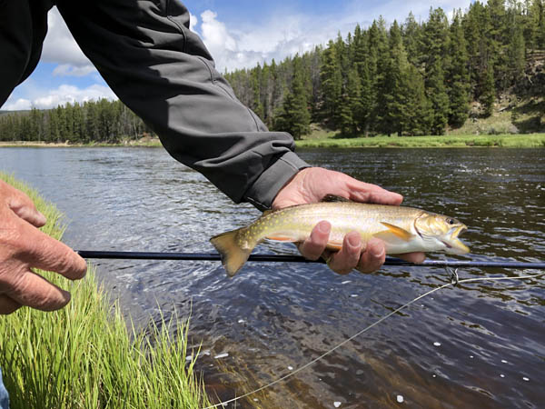 Big Hole River Brook Trout