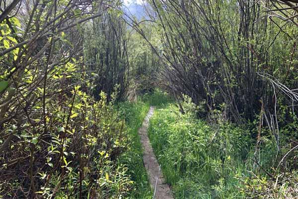 Fishing Path