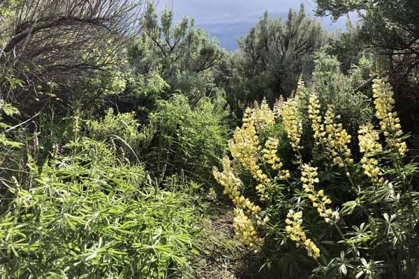Hiking path at Silver Creek Preserve