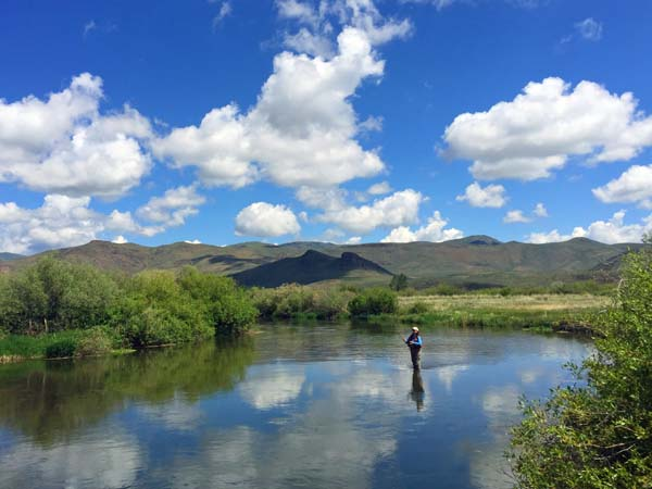 Silver Creek Fly Fishing in May