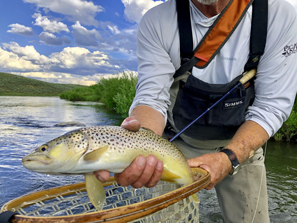 Big Brown Trout Caught on the Upper Green River in Wyoming