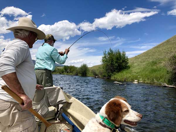 Hooking a big trout on the Madison River