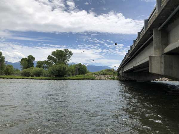 Swallows by the 287 Highway Bridge on the Madsion River
