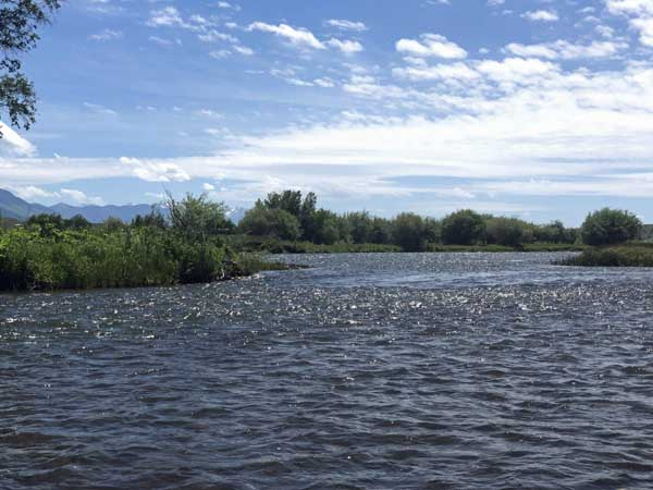 The Madison River in early July