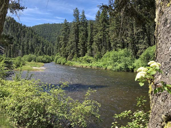 Rock Creek as it travels through Lolo National Forest