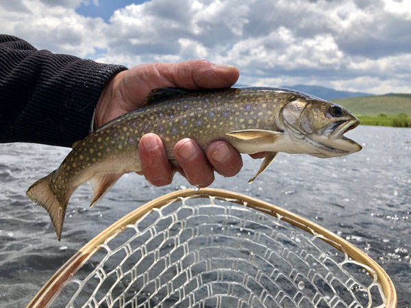 Brookie caught on the Big Hole RIver in Montana