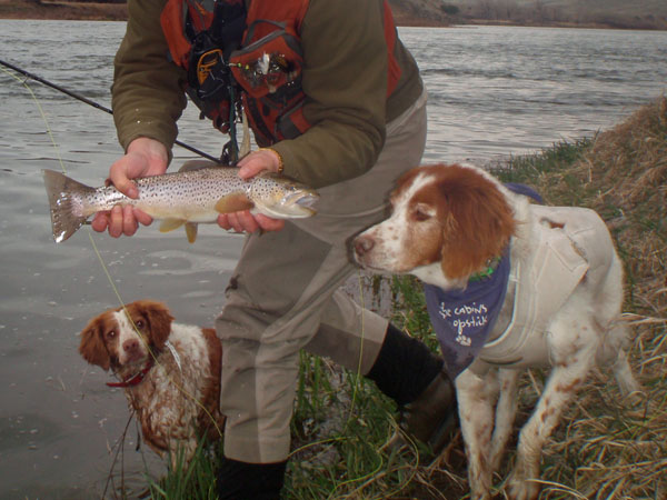 Catching Brown Trout with Dogs on the Missouri River