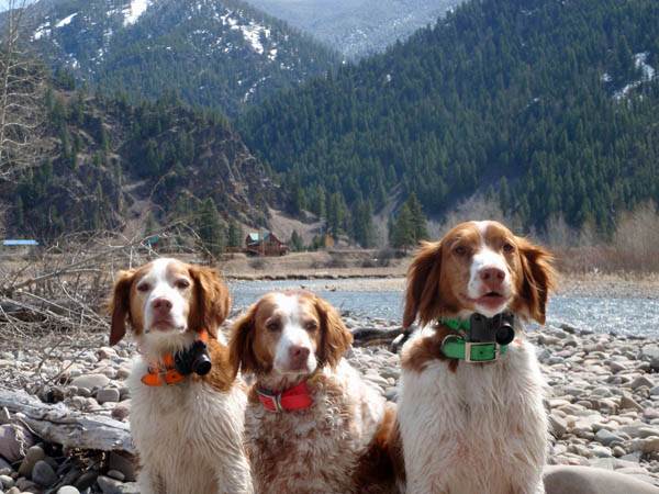 Jack, Dee, and Pie - Dogs Fishing on Rock Creek