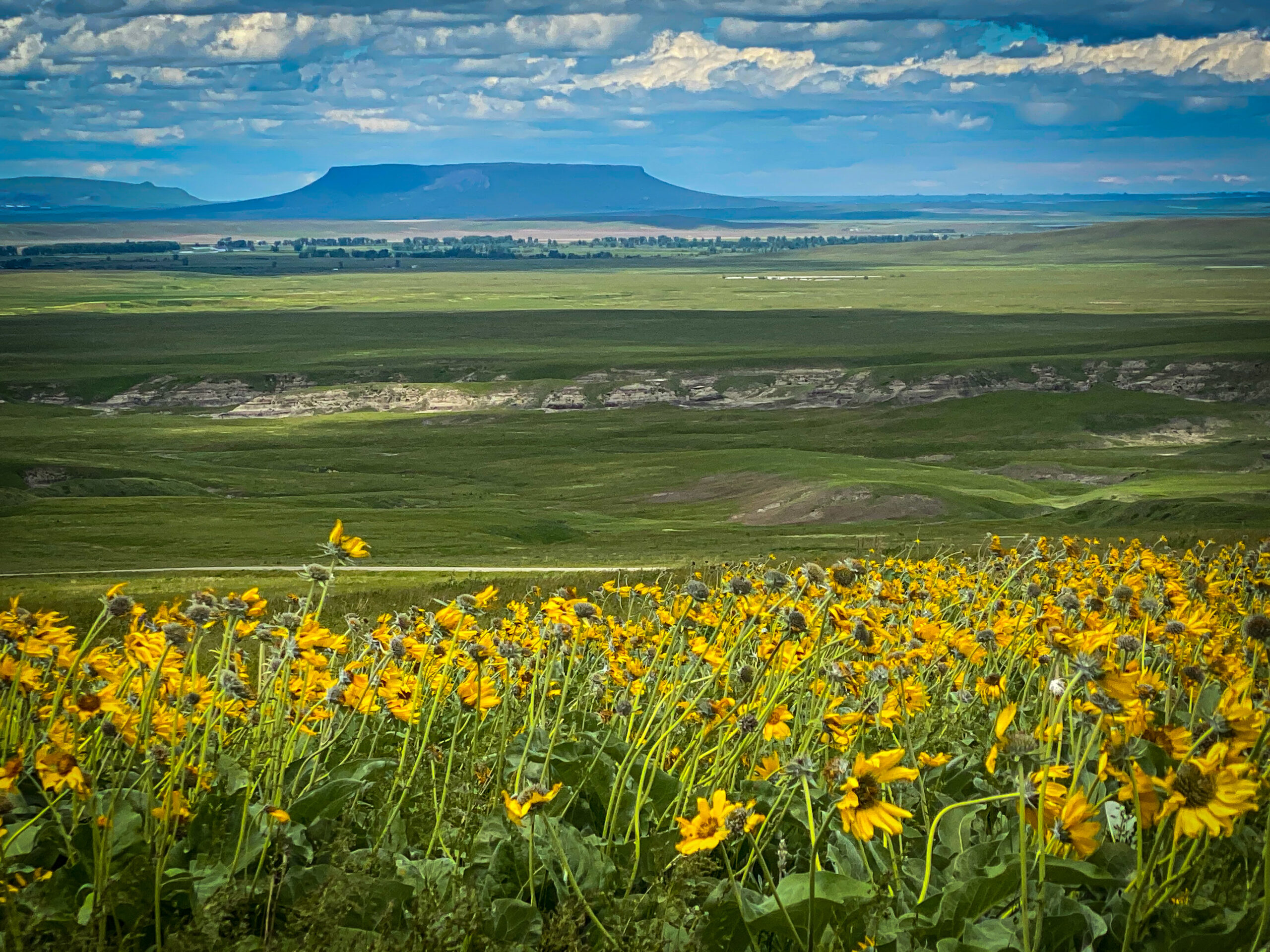 Square Butte and Montana Wildflowers in the Missouri River Valley