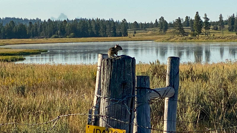 Golden Mantle grooms on a Idaho State Park fence post by the Henry's Fork of the Snake River