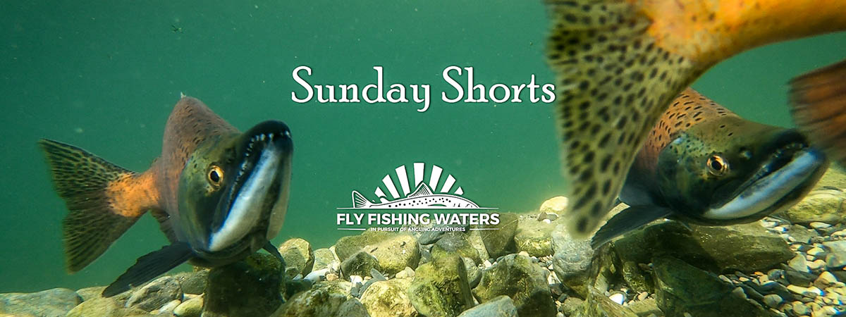 Sunday Short Videos From Fly Fishing Waters