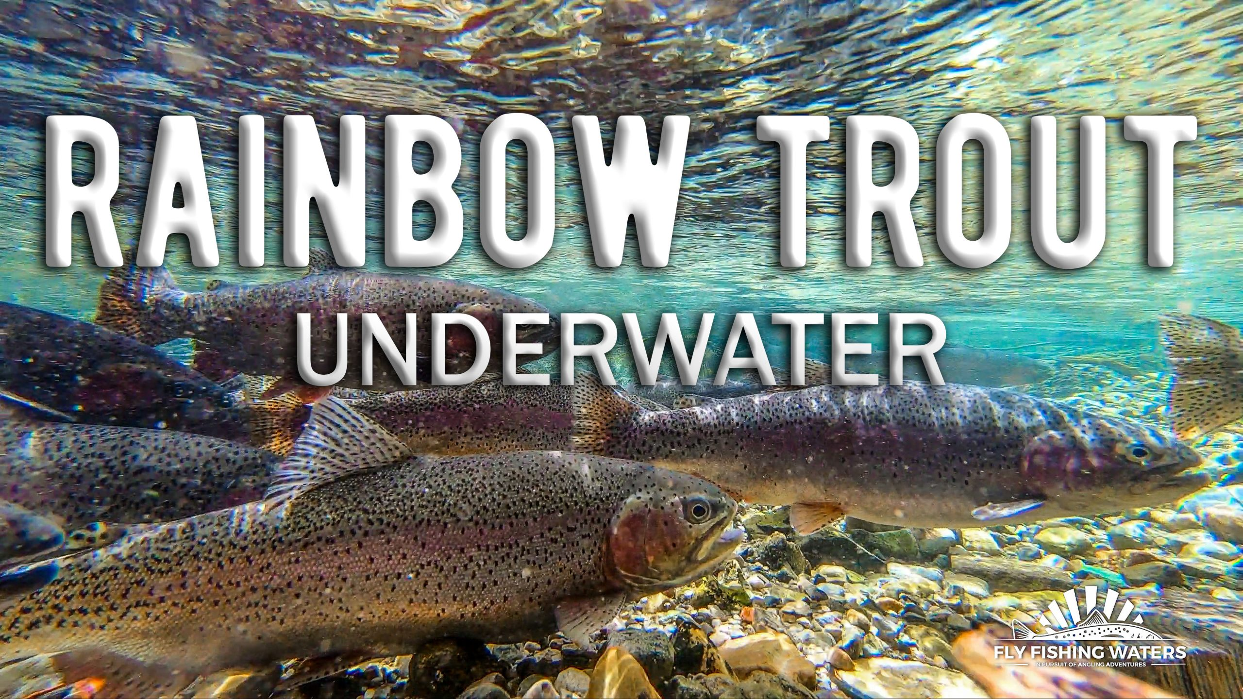 Rainbow Trout Underwater Video