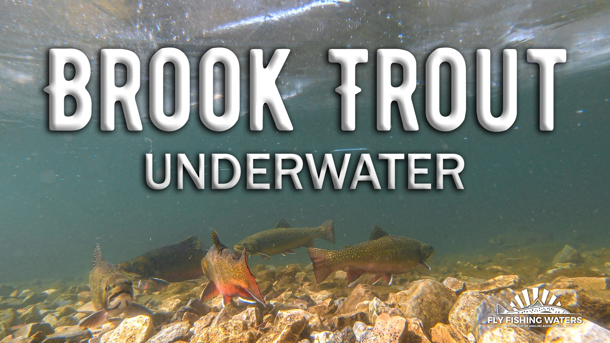 Brook Trout Underwater Video