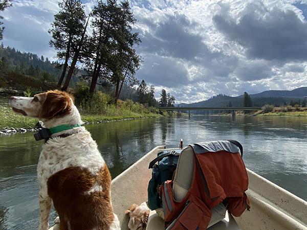 Belle fishing the Clark Fork River