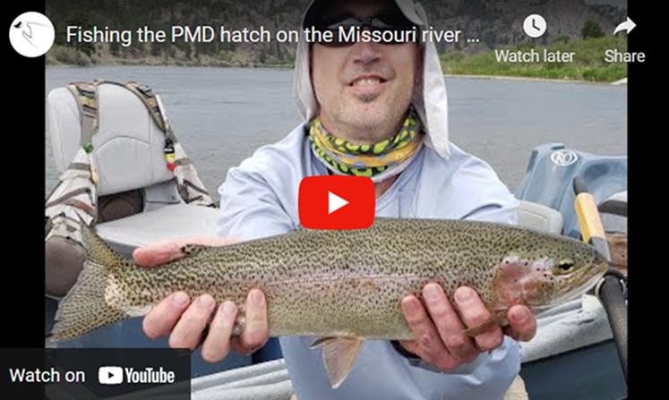 PMD Hatch on Missouri River
